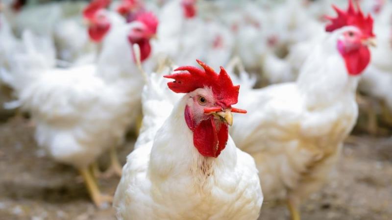 Арканзасские фермеры применили блокчейн для отслеживания поставок