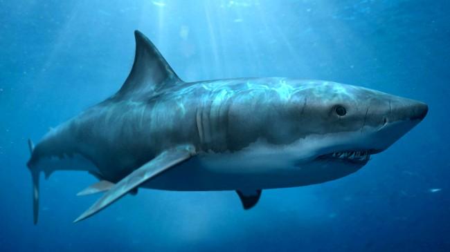 Акулы кусают подводные кабели Google