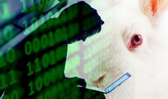 Эксперты ЛК нашли способ восстановления зашифрованных Bad Rabbit файлов