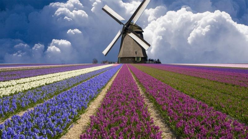 В Нидерландах 2% семей имеют сбережения в криптовалютах