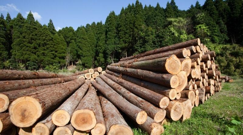 Китай и Россия построят блокчейн биржу лесных ресурсов