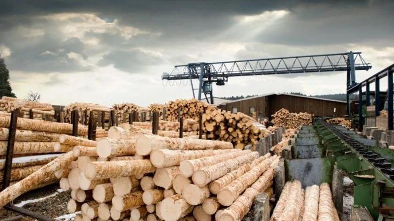 Для покупки леса на Дальнем Востоке предложили использовать блокчейн