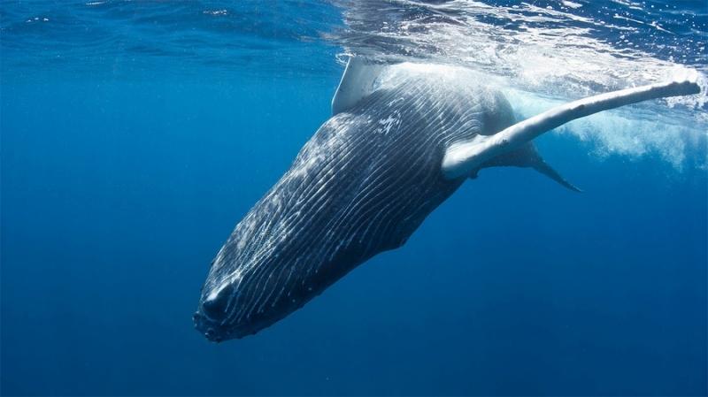 WhaleFUND: криптовалютные киты займутся океанскими