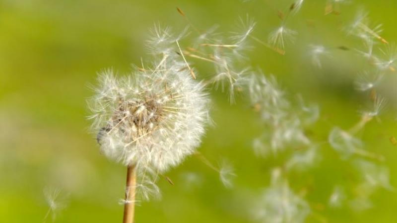 Предложение по анонимизации биткоина Dandelion переходит в тестовую фазу