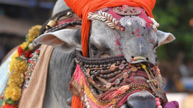 Криптовалютное регулирование Индии будет опубликовано в сентябре
